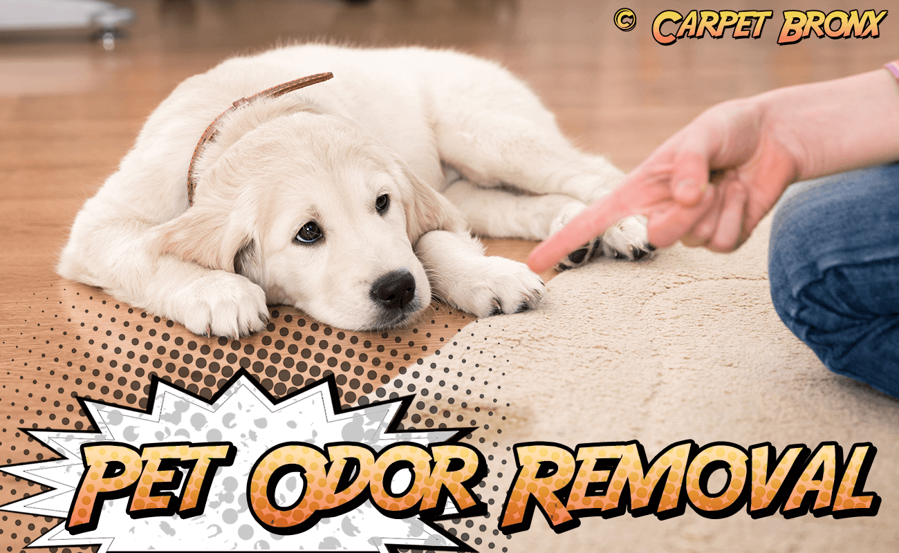 Pet Urine Odor Removal